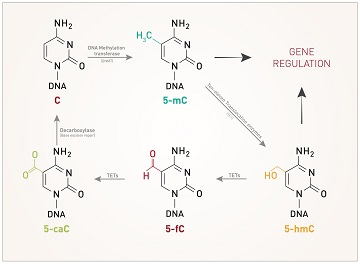 dna-methylation